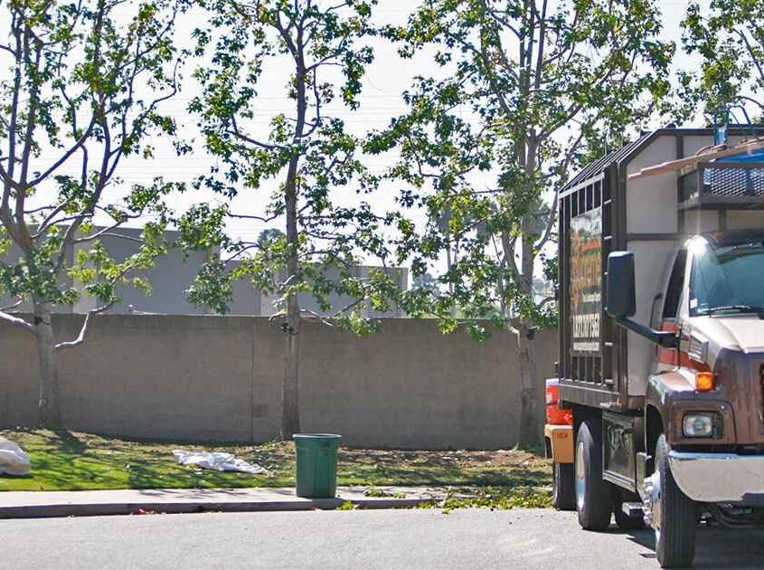 Tree height reduction service tustin ca