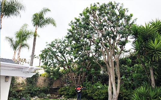 Supreme Tree Experts worker providing tree maintenance in backyard