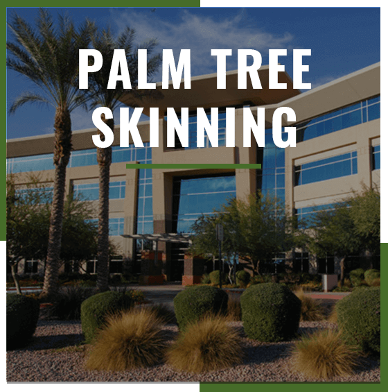 Supreme Tree Palm Tree Skinning service badge with landscaped office building in the background