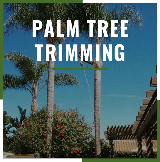 Supreme Tree Palm Tree Trimming service badge with palm trees in background