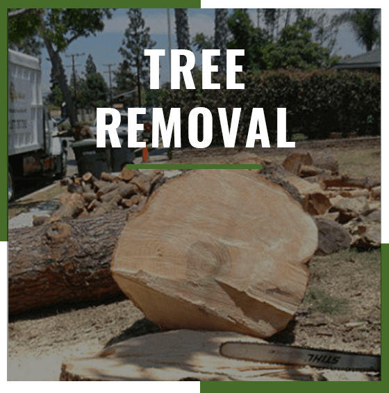 Supreme Tree Experts Tree Removal service badge with removed tree in background