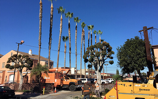 Supreme Tree Service truck trimming palm trees in Orange County neighborhood