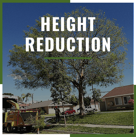 "Supreme Tree Experts ""Height Reduction"" Badge shown with tree in front lawn in background"