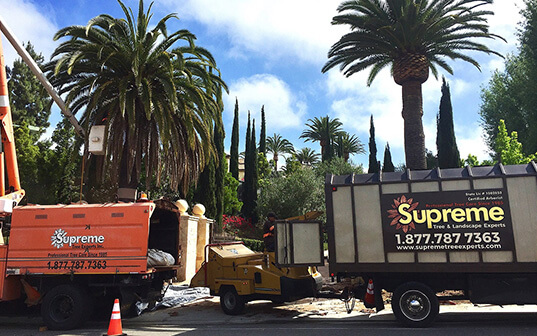 Supreme Tree palm tree service trucks working on location
