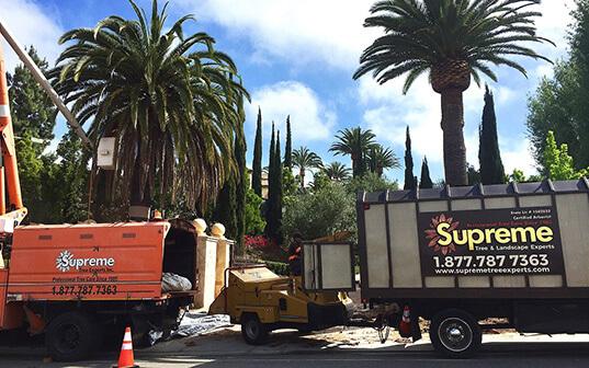 Supreme Tree palm tree service trucks working on location