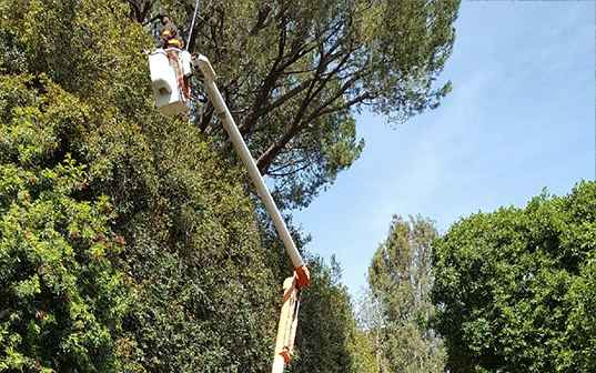 Supreme Tree Experts truck worker trimming high tree branches with crane
