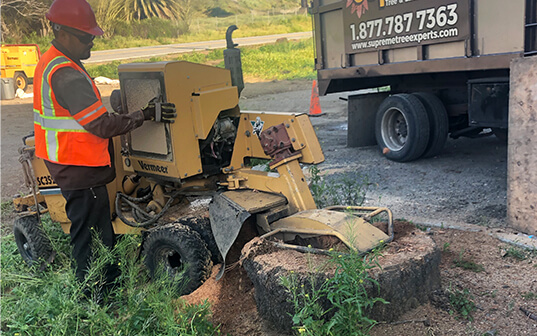 Supreme Tree expert removing stump from ground in carson california