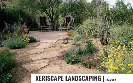 Xersicape style landscaping in orange county with greenery and colorful flowers