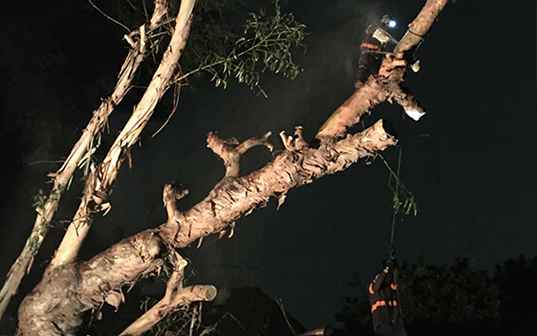 Supreme Tree Experts worker performing emergency tree removal at night in los angeles